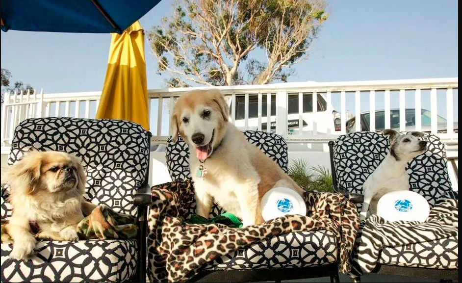 Best Pet-Friendly Restaurants In Orange County